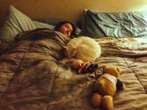 ネコの添い寝