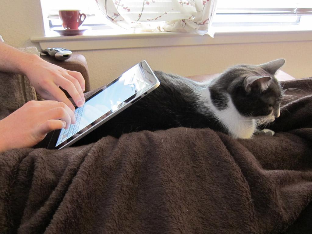 ネコが邪魔する中ブログを書く