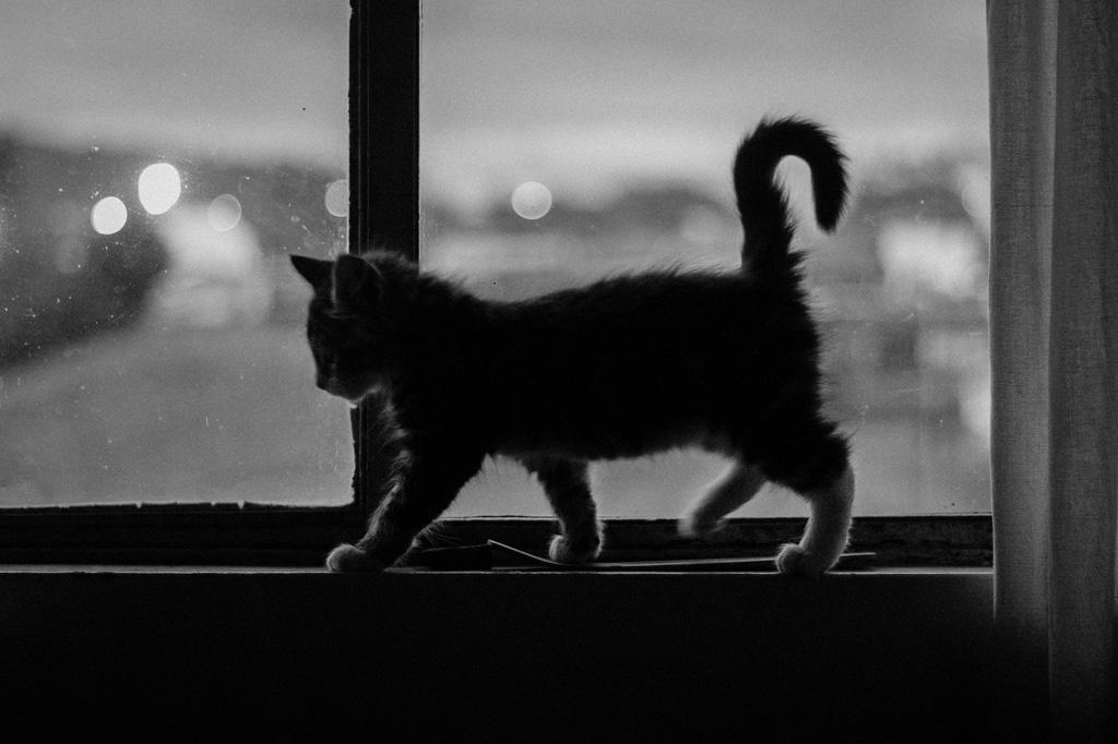 猫が愛しいと思う瞬間